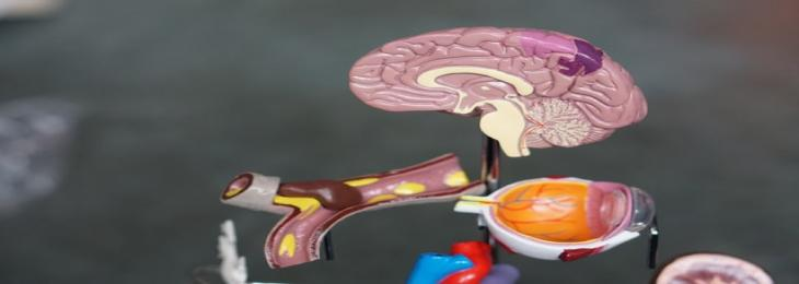 Researchers Experiments on Brain Implants to Detect and Relieve Pain Instantly