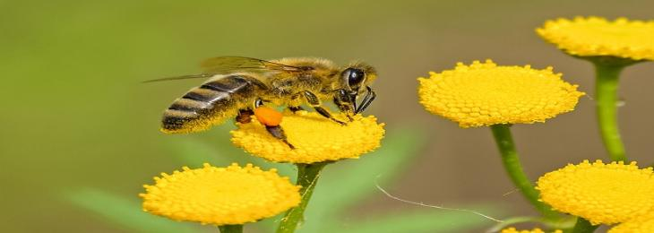 The Decline of Pollinator Species Threatens the Ecosystem